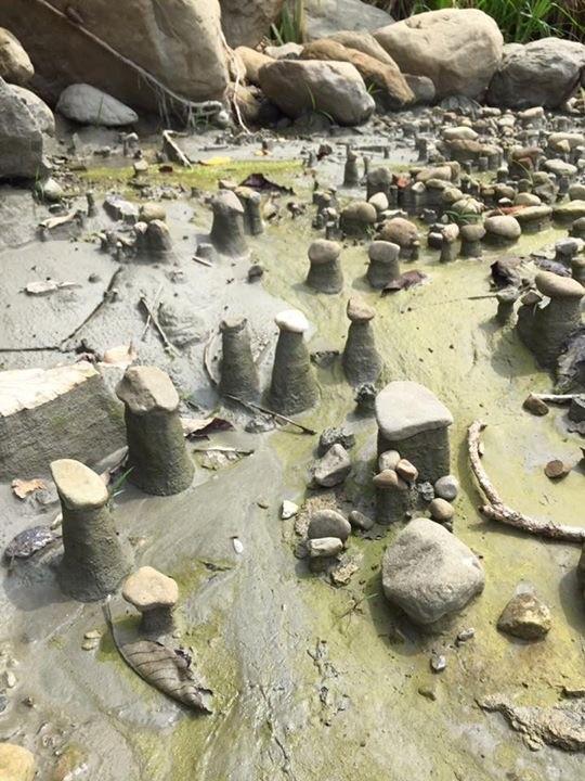 古坑草嶺竹篙水溪溪床出現的奇特景象,每根石柱上都有一顆石頭,令人驚訝。(林貝珊提供)