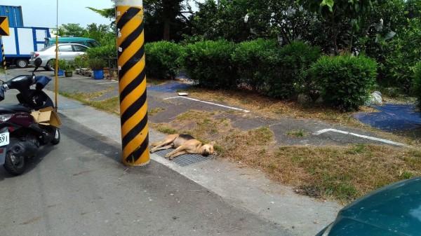 台南安南區府安路三段發現3條流浪犬的屍體,疑似遭毒害。(記者邱灝唐翻攝)