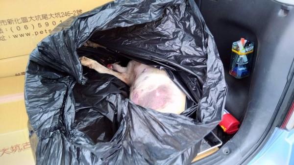 台南市動保處長吳名彬表示,遺體將帶回解剖,藉此保存證據。(記者邱灝唐翻攝)