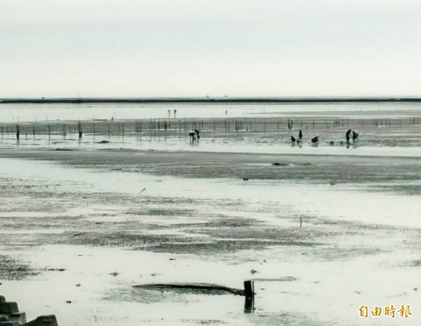 漢寶濕地是體驗潮間生態與挖文蛤的好地方。(資料照,記者陳冠備攝)