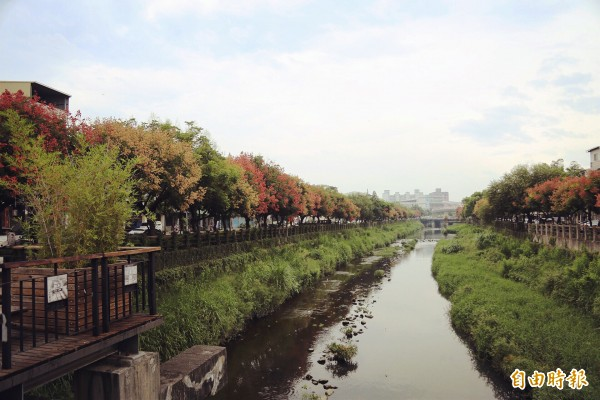 國慶樹掩映溪畔美極了 潘孟安:這裡真的是屏東 - 生活 - 自由時報電子報