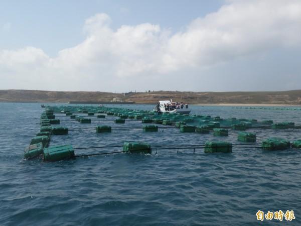 高密度的箱網養殖,疑似馬公內海灣汙染原因之一。(記者劉禹慶攝)