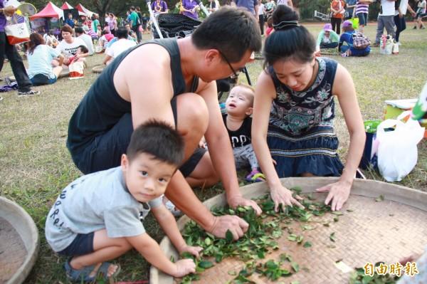 許多民眾全家出動,家長帶著小朋友體驗揉茶的步驟。(記者佟振國攝)