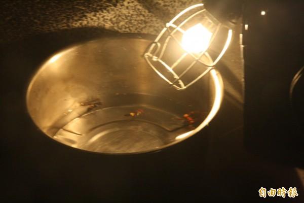 摘除過程中有些並未「被捕」入袋的虎頭蜂們,因為趨光性,落入「米酒池」內,醉倒後導致溺斃。(記者黃美珠攝)