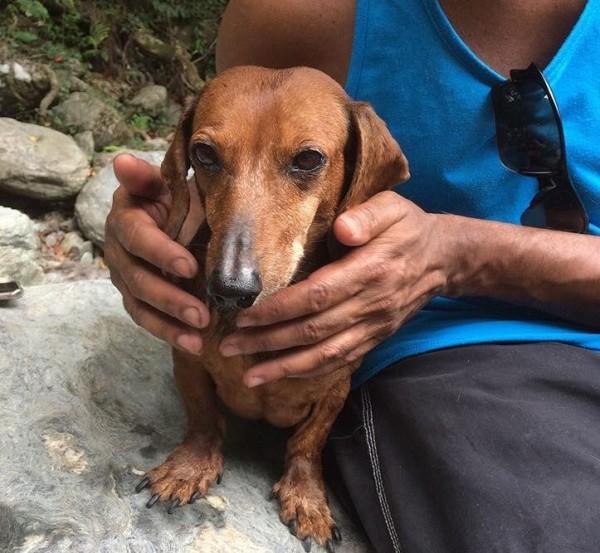 加拿大籍的Ryan與愛妻飼養的臘腸犬「Spongy」仍未尋獲,Ryan持續抱持希望,盼愛犬能早日回家。(圖由浪浪別哭提供)