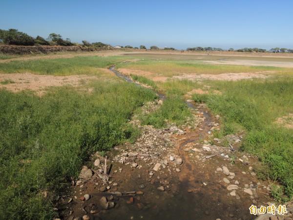 新豐鄉佔地逾10公頃的光復圳8之12池1個月前就乾了,遍佈死魚長滿蛆,蒼蠅肆虐,惡臭沖天。(記者廖雪茹攝)