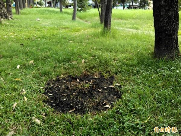 公園草地被燒到焦黑。(記者陳文嬋攝)