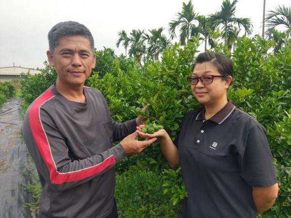 林田樹(左)、鍾艾芬(右)攜手讓家中檳榔田轉型,投入香檬種植。(記者羅欣貞翻攝)