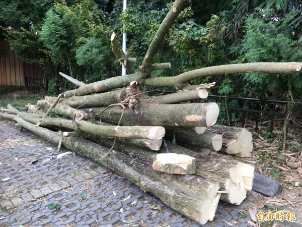 已經砍除的黑板樹幹暫時堆置於虎頭山飛行傘起降場旁的停車場。(記者佟振國攝)