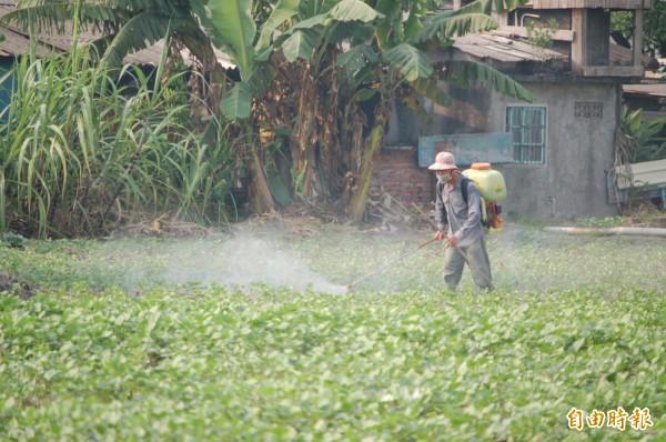 農委會同意明年在萬丹紅豆區試辦農藥代噴製度。(記者葉永騫攝)