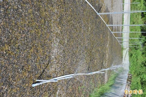 雨來菇田容易長雜草。(記者蔡宗憲攝)
