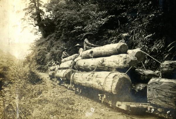 早期太平山林木便是由台車經鐵軌運送下山,而蹦蹦車也是經台車改造而成。(羅東林管處提供)