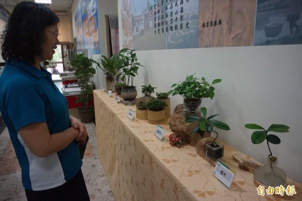 雅潭地政所展出同仁手作小盆栽,兼具綠美化辦公空間及療癒的效果。(記者歐素美攝)