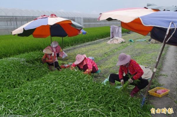 國土計畫草案限縮農地使用範圍,地方鳴不平。(記者林國賢攝)