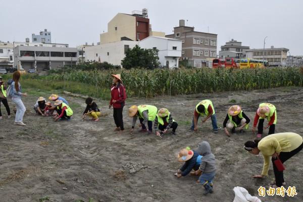 麥寮鄉麥豐社區大人、小孩一起種麥。(記者黃淑莉攝)