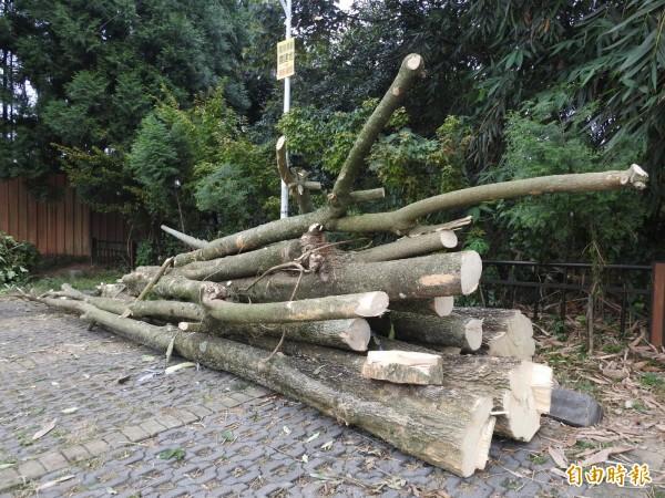 6株黑板樹的材積,林務局南投林管處也會換算價金後一併求償。(記者佟振國攝)