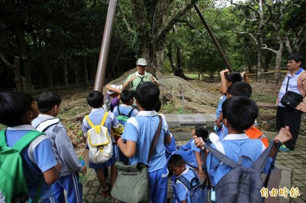 墾丁國家森林遊樂區的銀葉板根是園內著名樹種。(記者陳彥廷攝)