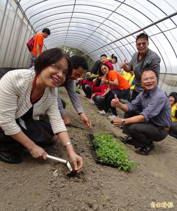 桃園市大溪區「康莊有機聚落」的有機蔬果種植。(記者李容萍攝)