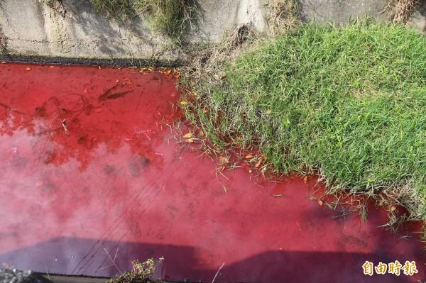 環保局追查,紅色廢水為上游染菊業者排放的食用色素染菊廢水,並無毒。(記者陳冠備攝)