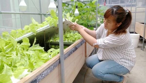 勞動力發展署雲嘉南分署委辦的產業節能班魚菜共生簡易系統,未來可導入商業化系統。(記者王俊忠翻攝)
