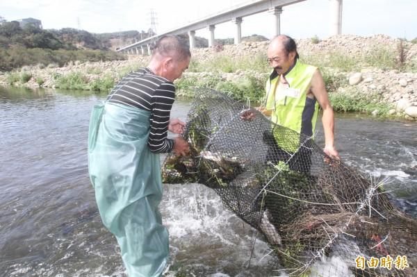 苗栗縣河川生態保育協會人員,會同警方,前往後龍溪拆除定置網,將網內的毛蟹及原生種魚類放生。(記者彭健禮攝)