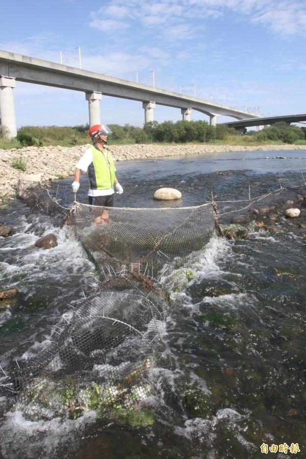 苗栗縣河川生態保育協會人員,會同警方,前往後龍溪拆除定置網。(記者彭健禮攝)