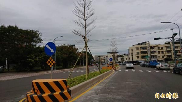 新竹市建功高中前的道路分隔島改成低矮型後再植栽美化,讓學生及駕駛都更安全了。(記者洪美秀攝)