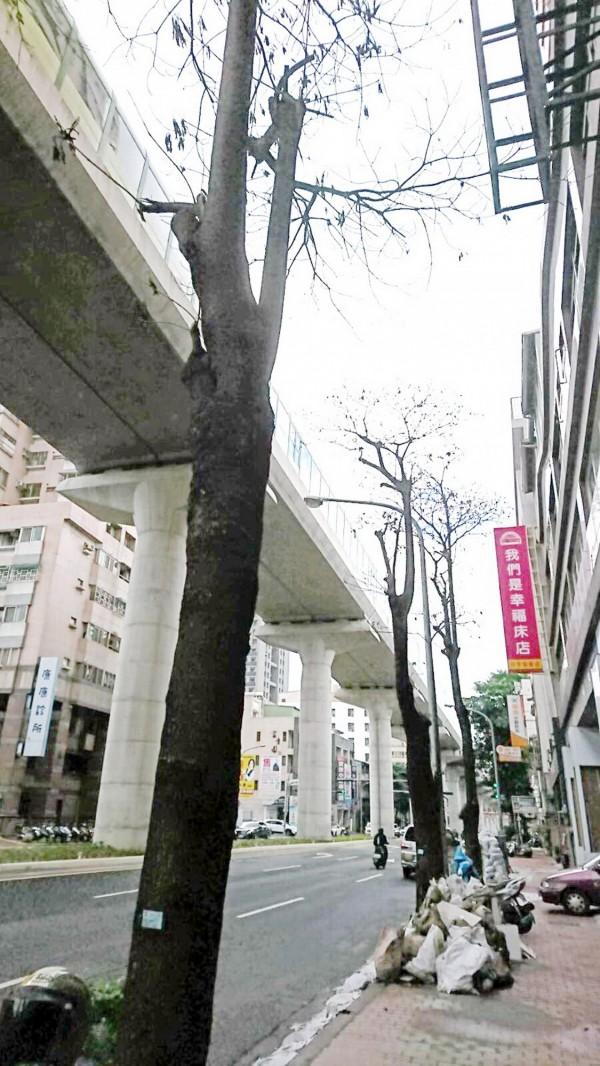 文心路四段上的行道樹已枯萎。(圖由建設局提供)