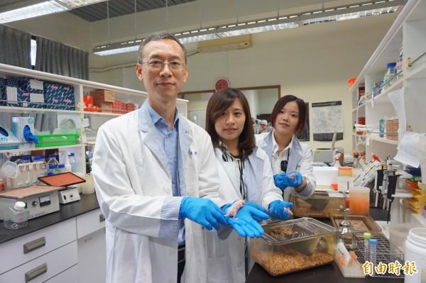 中正大學生物醫學科學系教授陳永恩(左)與研究助理對手上罹患惡性膀胱癌的小鼠投藥試驗,發現服藥後的小鼠,腫瘤縮小一半。(記者曾迺強攝)