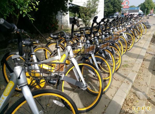 oBike共享單車陸續進駐西螺及斗南。(記者黃淑莉攝)