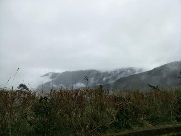太平山下雨起霧,出現另一種風情。(圖由羅東林管處提供)