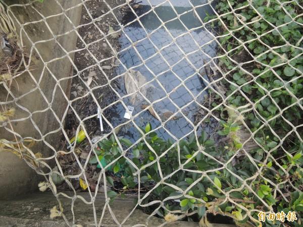 新竹縣竹北市嘉豐二街二段石砌而成的生態水圳,近來被民眾抱怨宛如臭水溝,還遭亂丟垃圾。(記者廖雪茹攝)