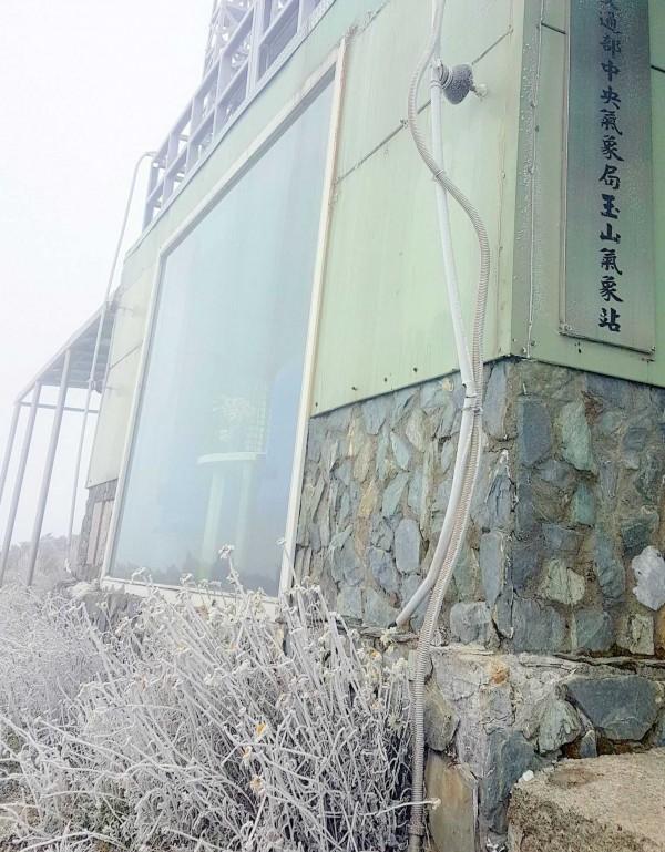 氣象局北峰氣象站牆角旁草叢也出現「霧淞」現象。(記者謝介裕翻攝)