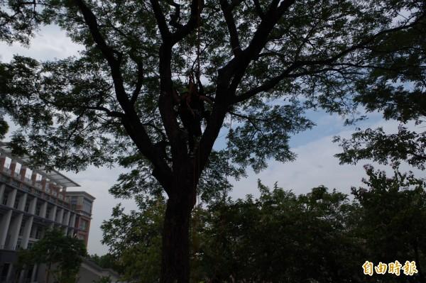 學生攀樹體驗自然,因親近更深度體會環境保育。(記者林國賢攝)