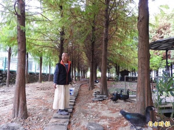 九佃落羽松園主李武凱最近忙著整理園區,也道出遊客缺乏公德心等行為令他「切心」。(記者佟振國攝)