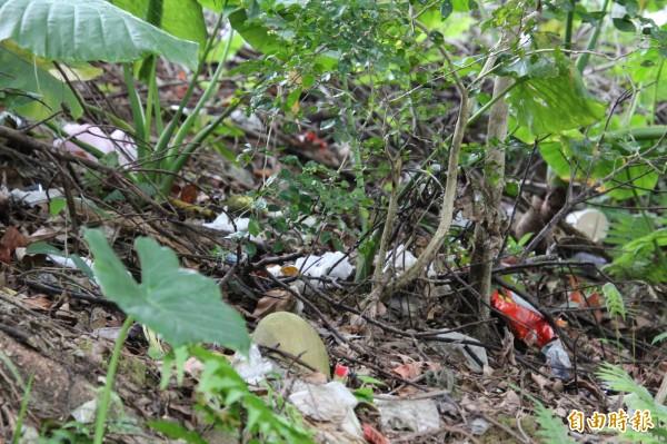 國道3號關西服務區坦承因欠缺密閉式垃圾堆置場,有些垃圾確實會被強勁的東北季風颳入邊坡草叢,今天下午他們已經緊急清除乾淨。(記者黃美珠攝)