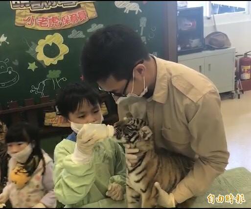 到今年4月1日為止,家有年滿6歲以上的孩童者,有興趣,可以付費報名體驗如何替小老虎餵奶等。(記者黃美珠攝)
