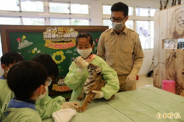 在獸醫師吳炫毅(右)的指導下,小朋友強忍住興奮,小心翼翼地餵小老虎喝奶。(記者黃美珠攝)