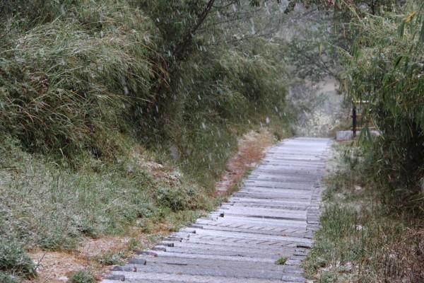 寒流發威,玉山塔塔加園區除了下冰霰還夾雜薄雪。(玉管處提供)