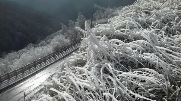 太平山區結冰景色。(記者江志雄翻攝)