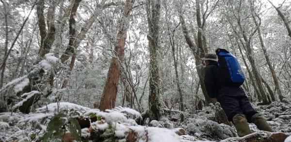 太平山區冷颼颼。(圖由羅東林管處提供)