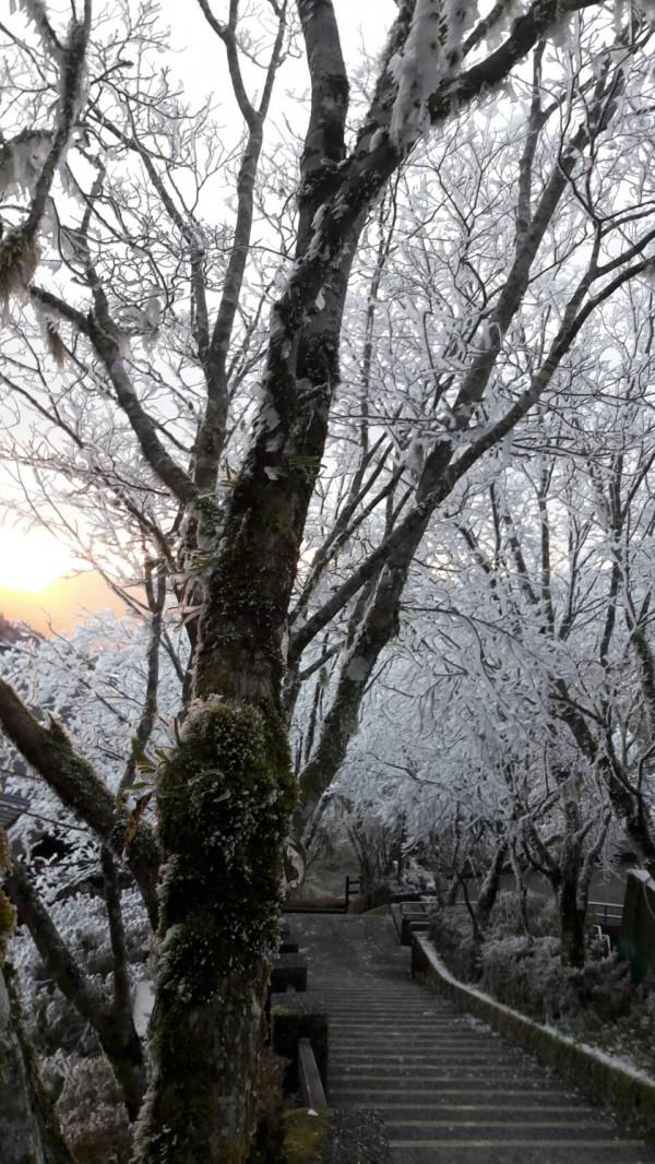 太平山霧淞美極了。(記者江志雄翻攝)