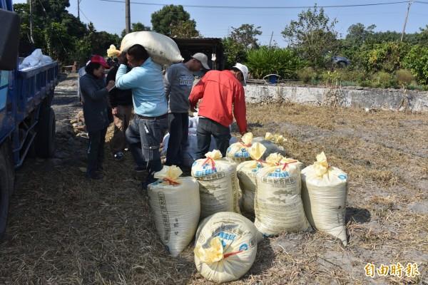 紅豆在農田收割後打包準備送出交易。(記者葉永騫攝)