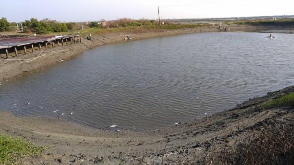 台南七股混養的虱目魚被零星凍昏。(圖由漁業署提供)