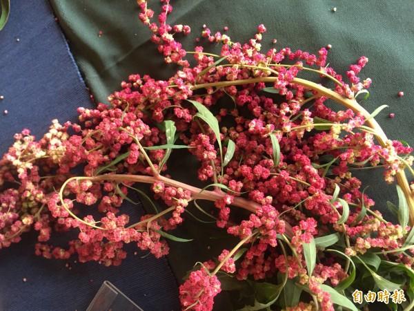 鮮豔的新鮮紅藜。(記者羅欣貞攝)