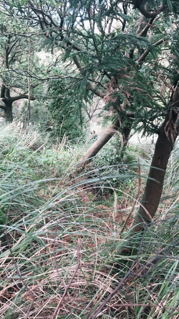 內湖一名地主整地時發現雜草中有散落骨頭。(民眾提供)
