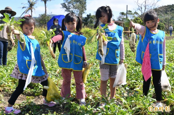 恆春牛杙仔蘿蔔盛產,許多社區都有採蘿蔔體驗活動。(記者蔡宗憲攝)