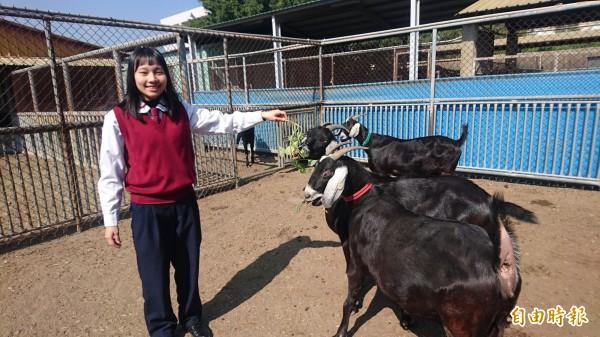 北農學生金姿伶喜愛動物,在學校實習牧場實習經驗不錯。(記者楊金城攝)