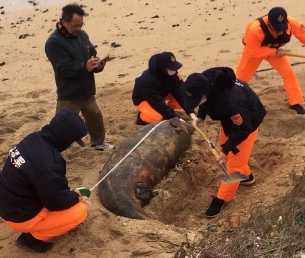湖西菓葉沙灘發現海豚陳屍,因無研究價值就地掩埋。(岸巡七總隊提供)