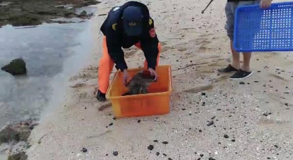 望安潭門安檢所接獲民眾報案,在中社海域搶救擱淺綠蠵龜。(岸巡七總隊提供)
